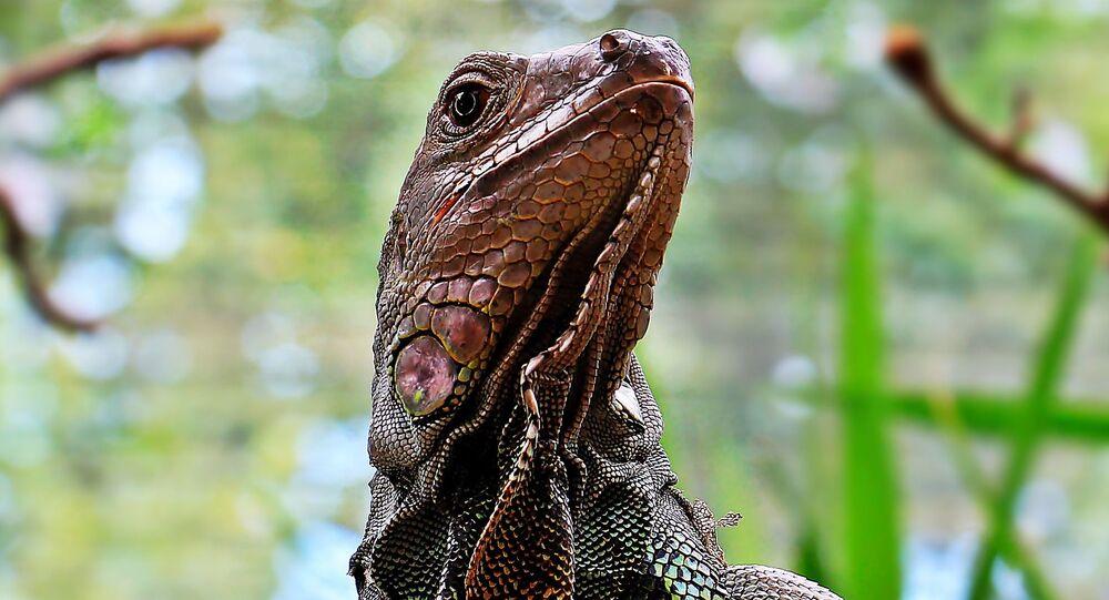 Giant lizard spotted in Delhi