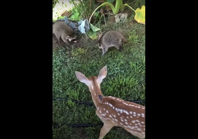 Friends From Many Species Play Together