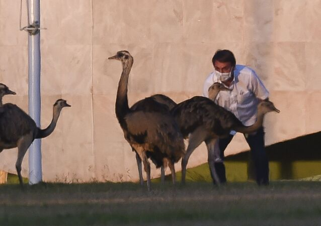 Brazilian President Jair Bolsonaro feeds emus outside the Alvorada Palace in Brasilia, Brazil, on July 13, 2020, in the midst of the new COVID-19 coronavirus pandemic