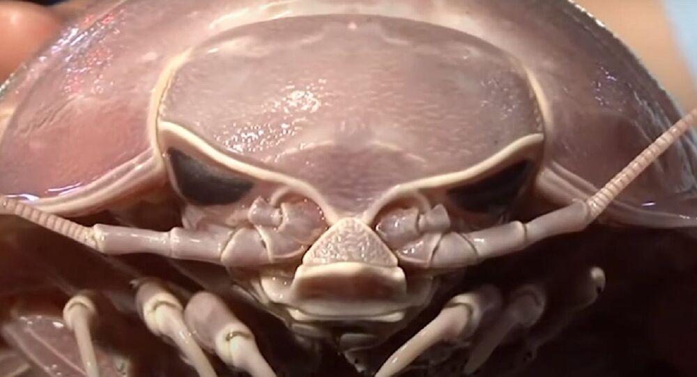 Sea Roach