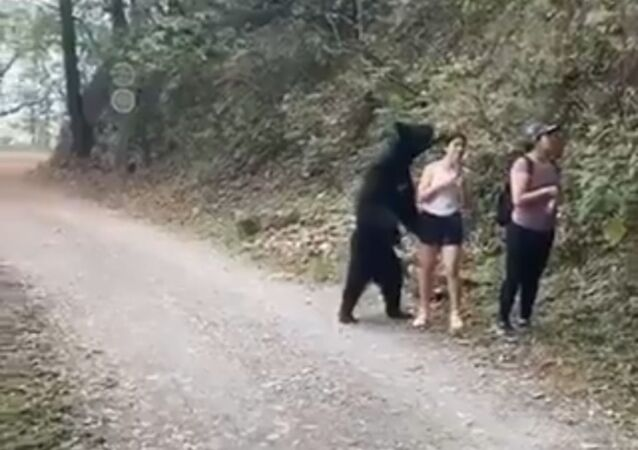 Couple goal: a bear and a girl make selfie together