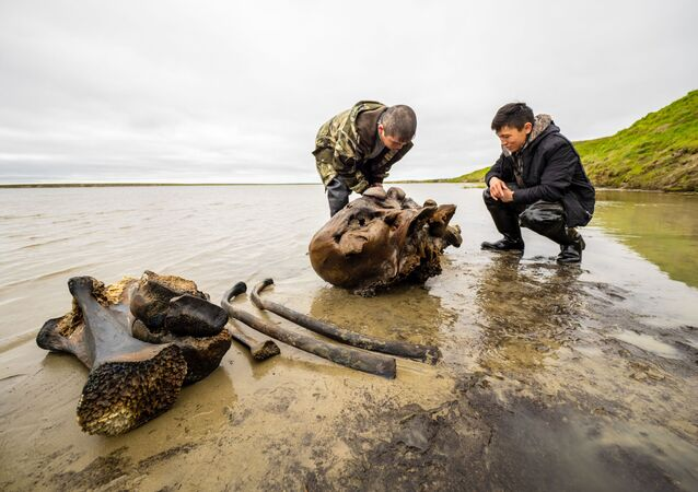 In this handout photo released by the press-office of Yamalo-Nenets Autonomous Area Governor, local residents looks at the remains of a petrified mammoth skeleton, which were found on the shore of lake Pechevalavato, outside the settlement of Seyakha, Yamalsky District, Yamalo-Nenets Autonomous Area, Russia