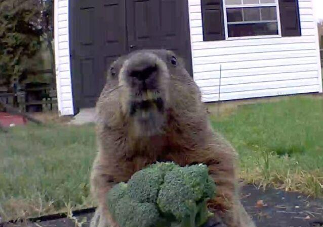 Happy Sunday!! See kids I LOVE broccoli..