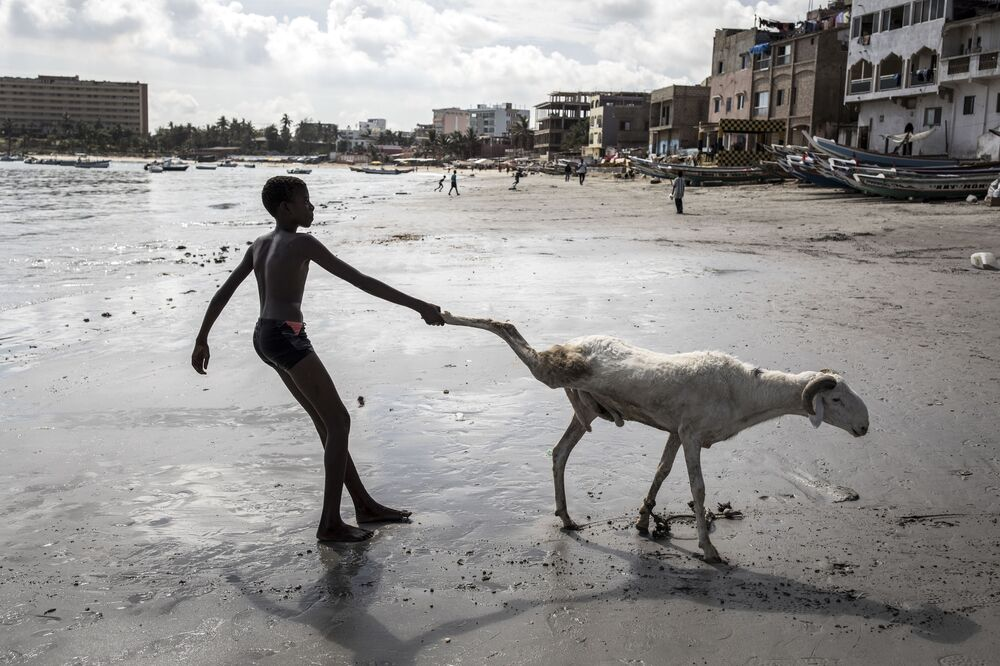 A young sheep farmer drags one of his sheep toward the sea in order to clean it in Dakar on 28 July 2020, ahead of the Muslim Eid al-Adha (Festival of Sacrifice), known as Tabaski in Western Africa. - Sheep farmers are starting to fill the streets of the Senegalese capital with their sheep ahead of the festival, when prices of their anmials can range from one hundred thousand West African Francs(CFA) to four million CFA (7000 US dollars).
