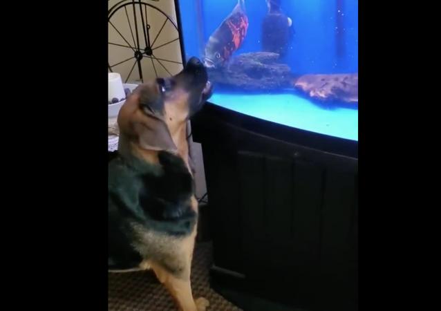 Dog VS fish