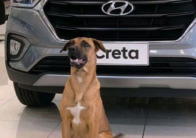 Hyundai Showroom Dog