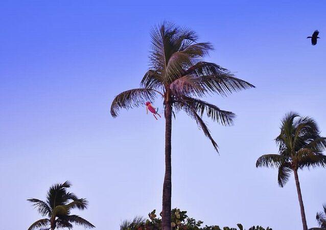 Palms. Mumbai