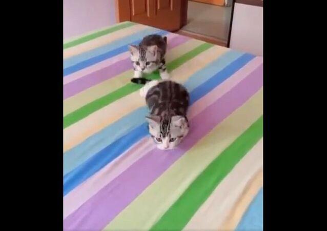 Cute Cat Online