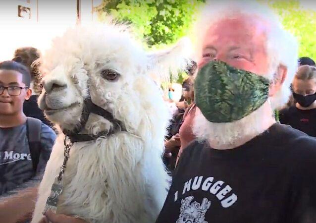 Jenny Young meets Caesar the No Drama Llama and owner at protests
