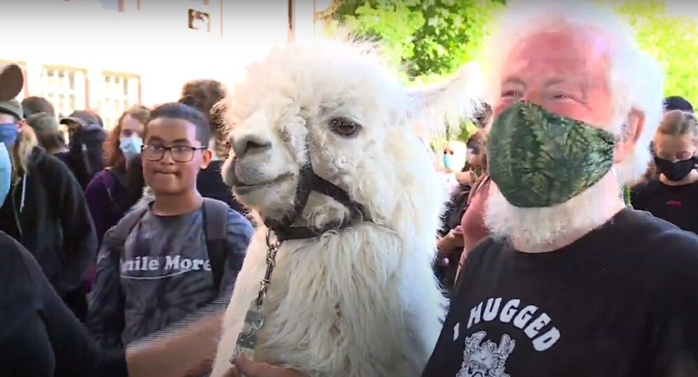 Jenny Young meets Caesar the No Drama Llama and owner at protests