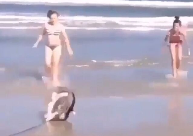 The dog flipped because he was running and ran out of leash
