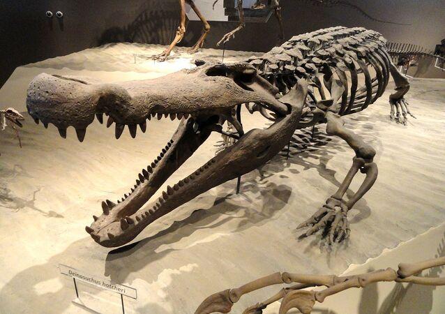 Deinosuchus hatcheri - Natural History Museum of Utah