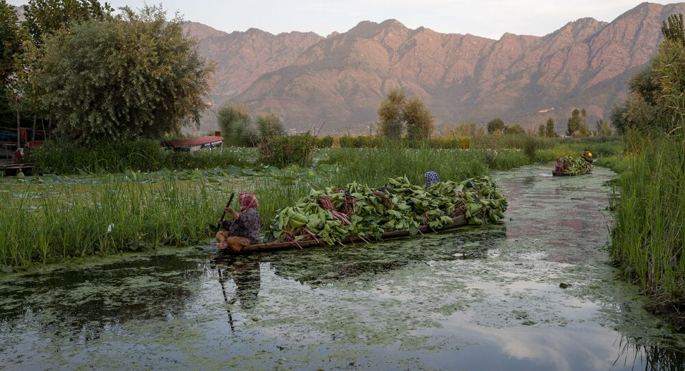 Kashmiri women row their shikara filled with fodder for cattle in the interiors of the Dal lake in Srinagar, Indian controlled Kashmir, Friday, Aug. 7, 2020