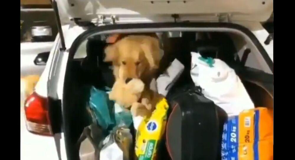 Golden Retriever Makes Daring Rescue to Save Friend