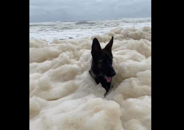 Dog in sea foam