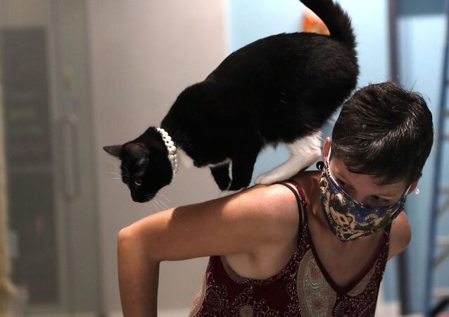 A cat named Bonnie walks on the shoulder of Rachel Romero, who wears a protective face covering as she works as a volunteer at the Cat Cafe South Beach, during the coronavirus pandemic, Wednesday, July 29, 2020, in Miami Beach, Fla. The cafe offers a place for cat lovers to spend time with cats, which are also available for adoption. The business, independently owned by Celyta Jackson, will be closing at the end of the week as the tourism sector in Miami-Dade County is suffering due to the pandemic