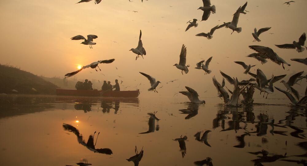 Seagulls Celebrating Wintry Mornings in Delhi on Yamuna Banks