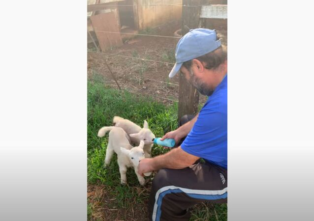 Precious Lambs Adore Breakfast Time With 'Dad'