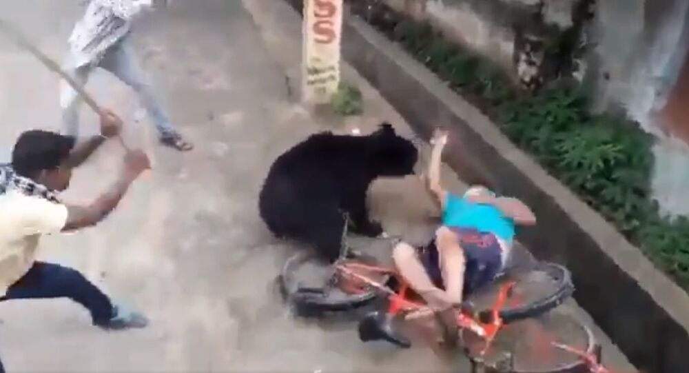 Bear attacks a man in bhawanipatna town today morning