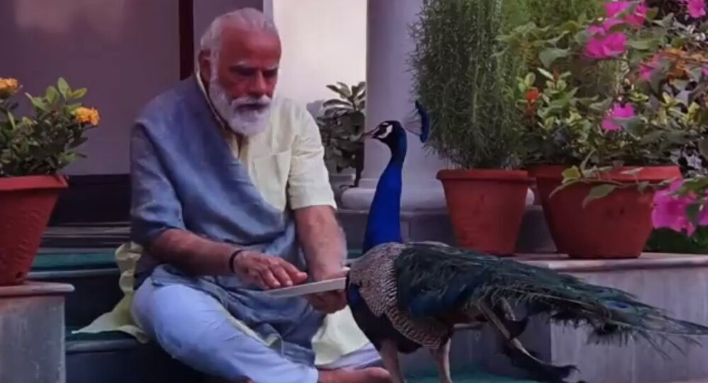 Indian Prime Minister Narendra Modi on Sunday shared a video on Twitter, showcasing his cherished moments and special bond with the peacocks at his residence in Delhi