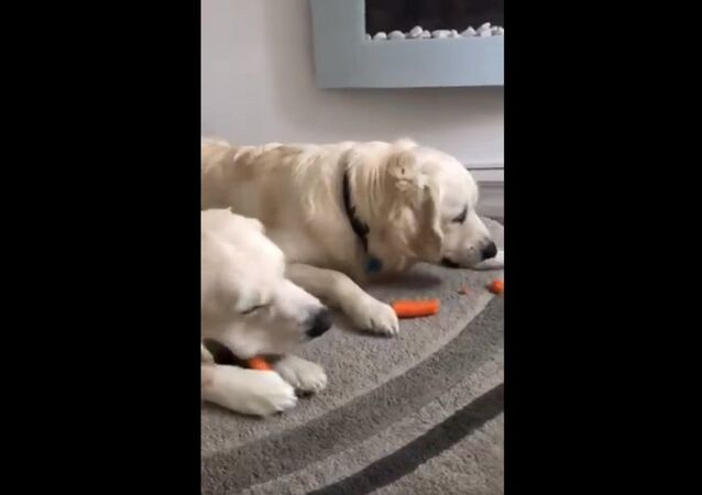 There are two ways to eat a carrot