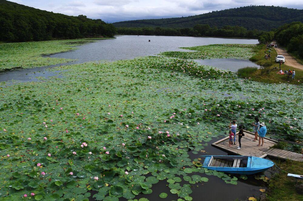Blooming lotuses in a lake outside Ussuriysk in Russia's Primorsky region.