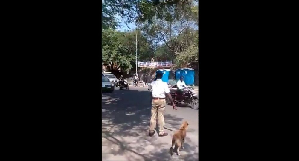 """Adorable clearing the road for a very important """"pedestrian"""" Love this cop!"""