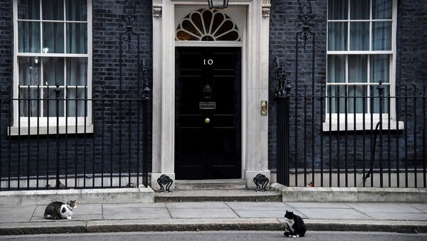 Larry the Downing Street cat and Palmerston the Foreign Office cat square off outside the British Prime Minister's official residence, 10 Downing Street - Sputnik International