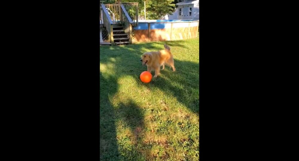Sonny loves playing with his horse bal