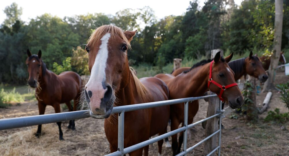 French police make first arrest over horse mutilations