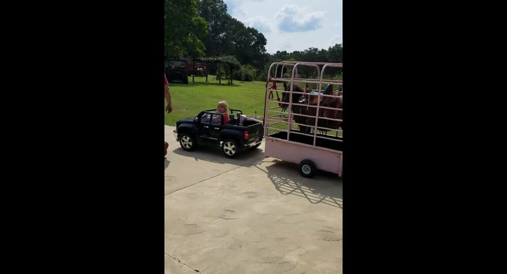 US Toddler Tows Mini Horse With Electric Car