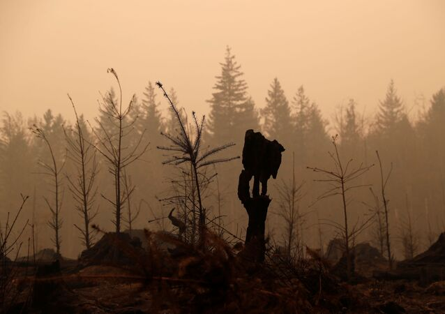Fire damaged forest is seen in the aftermath of the Riverside fire that ravaged Clackamas County in Estacada, Oregon, U.S., September 15, 2020.