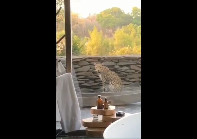 Sometimes we're so blessed to have a wonderful visitor for breakfast
