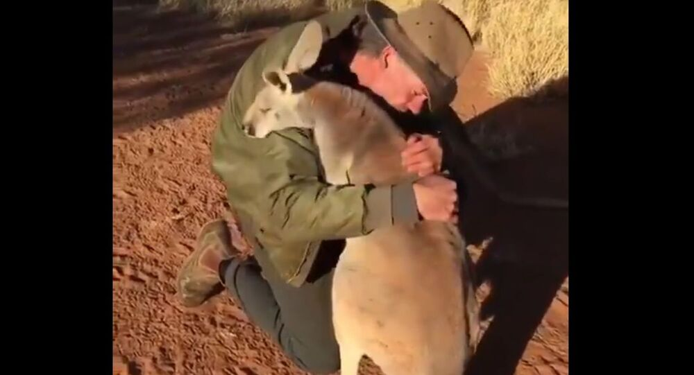 Sunday Energy: Dewey-Eyed Kangaroo Reminds us 'Love is Simple' and it Comes With Hugs