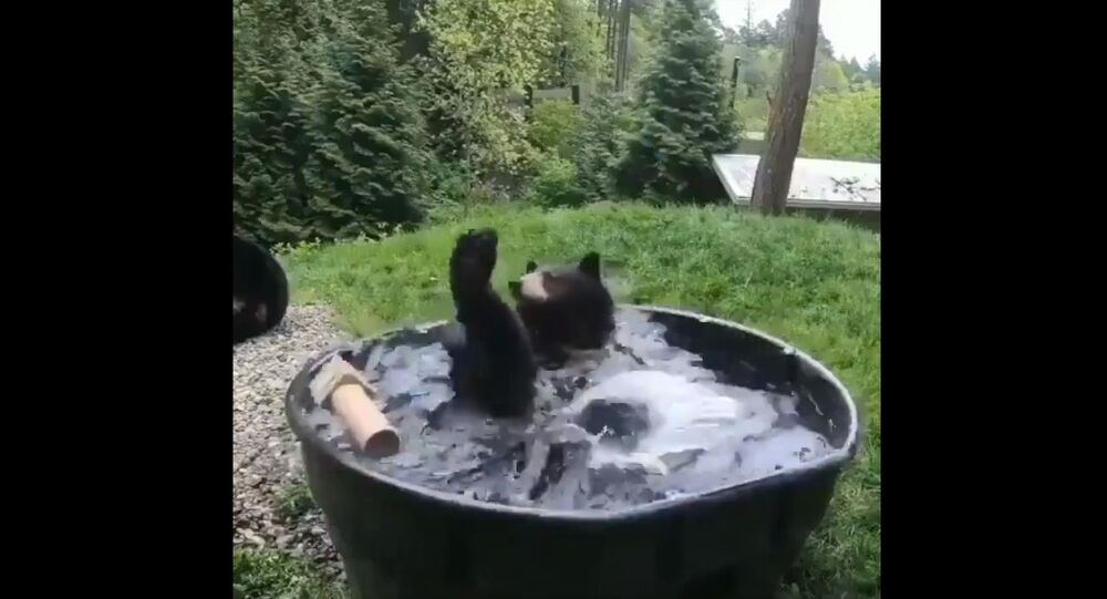Just a bear enjoying bath