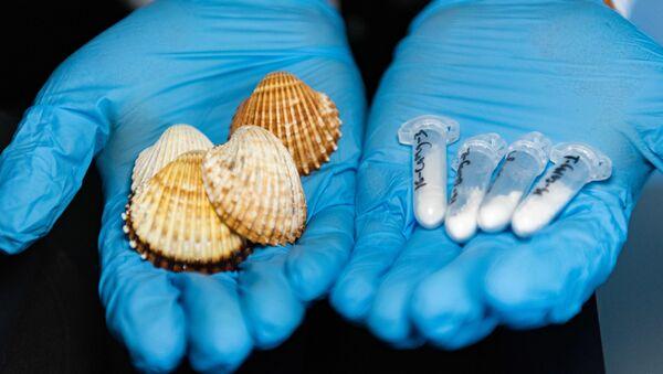 Evgeny Kolesnikov examines common cockle shells - Sputnik International