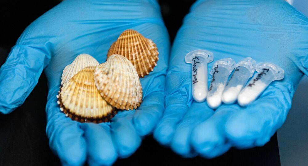 Evgeny Kolesnikov examines seashells