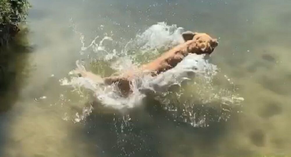 A water dog or a seal?