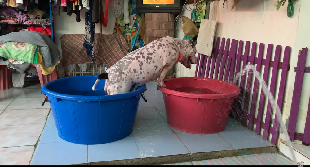 Thai Pup Ups the Ante With Water Exercises