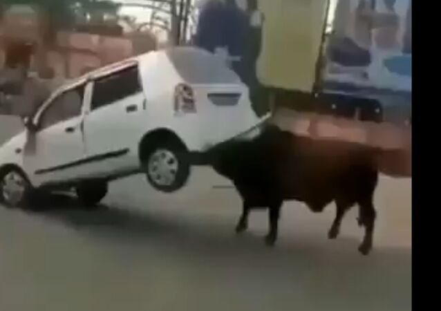 OMG! Watch This Raging Bull Wrecking Car, Throwing It Away With Ease