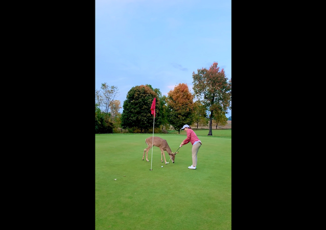 Curious Deer Inspects US Golfer's Skills
