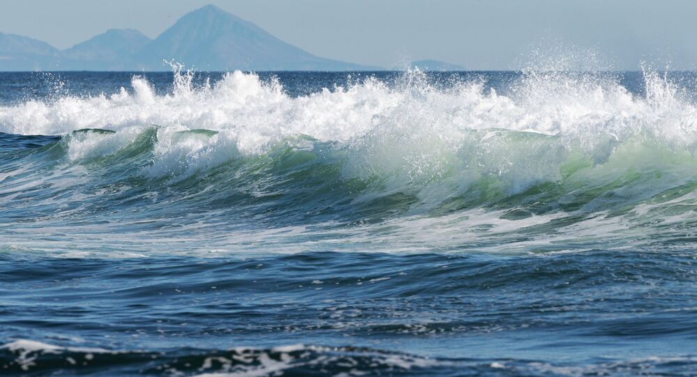 Mass death of marine animals at Russia's popular beach in Kamchatka""