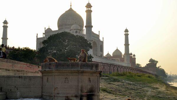 This photo taken on November 13, 2018 shows macaques monkeys gathering near the Taj Mahal monument in Agra in India's Uttar Pradesh state.  - Sputnik International