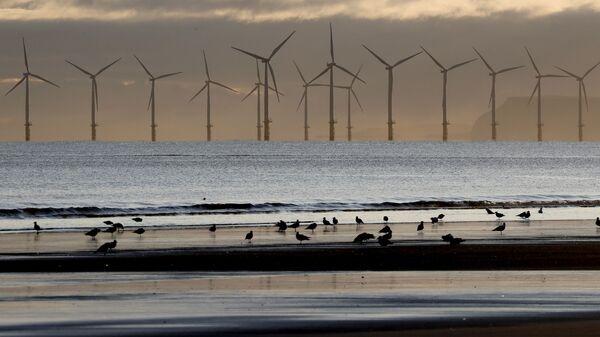 A wind farm off the coast - Sputnik International