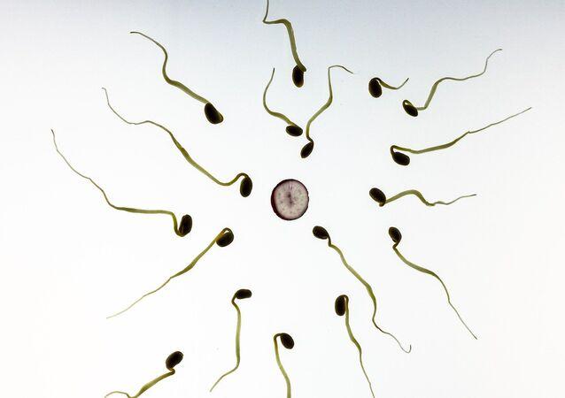sperm, egg
