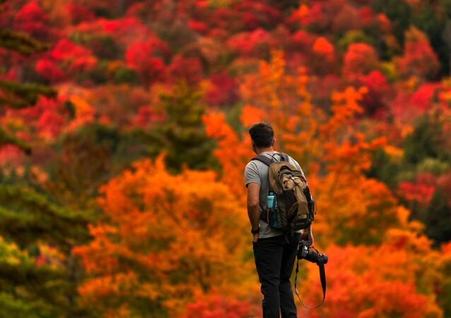 Gorkan Telci, of Southborough, Massachusetts pauses to consider where to aim his camera as the fall foliage on the eastern slope of Lower Wolfjaw Mountain in the Adirondacks leaves him spoilt for choice, Sunday, 27 September 2020.