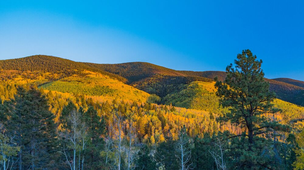 Foliage from Boreas Pass in Colorado, US, at Golden Hour.