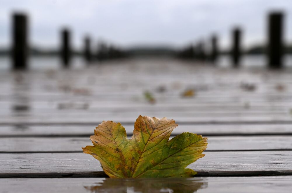An autumn leaf lies on the pier at lake Woerthsee near the small village of Inning, southern Germany, during rainy autumn weather on 7 October 2020.