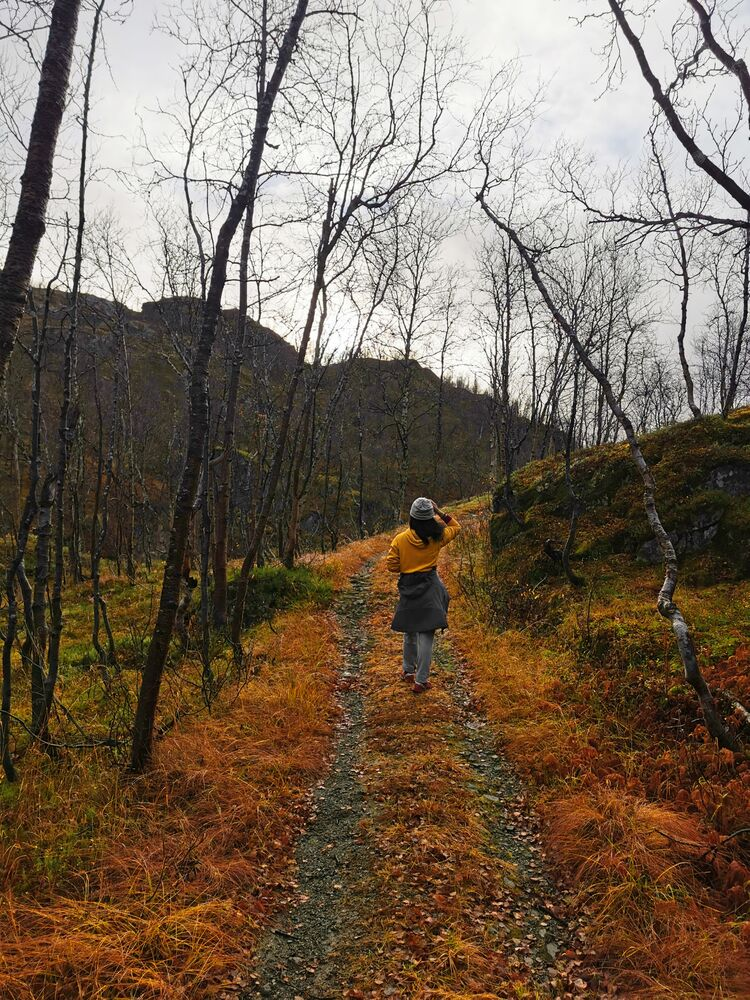 A walk in an autumn forest in Norway.