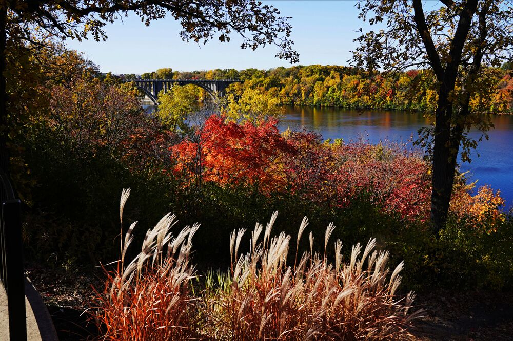 The leaves on the trees and the scrub change colour along the banks of the River Gorge on the St Paul, Minnesota side of the Mississippi River, Thursday, 8 October 2020.